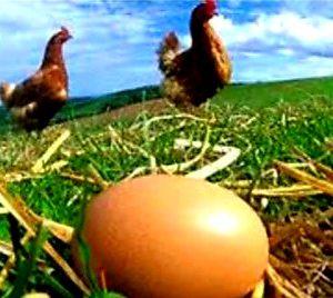 eggs freerange egg